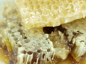 Honeycomb and honey — Stock Photo