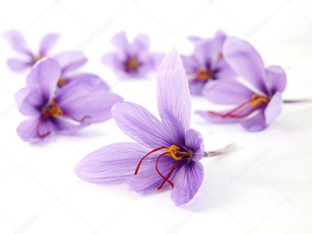 Saffron flowers — Stock © viperagp
