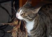 Cat playing — Stok fotoğraf
