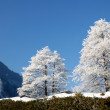 Stock Photo: Frost on trees