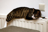Cat relaxing on heater — Stock Photo