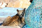 Gato e rede de pesca — Foto Stock