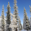 Stock Photo: Winter with mountains and spruce in snow