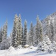 Foto de Stock  : Winter with mountains and fur-trees in snow