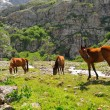 Horses and mountain river - Stock Photo