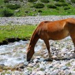 Horse and mountain river — Stock Photo #4149283