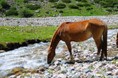 Horse and mountain river — Stock Photo