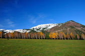 Landscape with yellow birches and mountain — Stock Photo