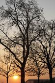 Siluet ağaçlarda kış — Stok fotoğraf