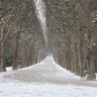 Tree Lined Path with Snow, Paris - Stockfoto