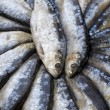 Stock Photo: Sardine Background
