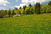 """Field of dandelions in """"Vall — Stock Photo"""