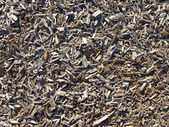 Mulched ground — Stock Photo