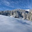 Beautiful untouched snow and trees in the alps — Stock Photo