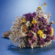 Dried flowers - Stock Photo