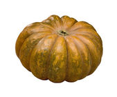 Pumpkin isolated on white (clipping path) — Stock Photo
