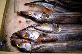 Fryst fisk — Stockfoto