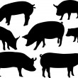 Pigs — Stock Vector #4187429