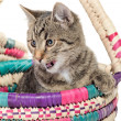 Striped kitten with white speck — Stock Photo