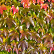Variegated background of autumn leaves — Stock Photo