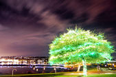 Green tree illuminated — Stock Photo