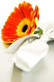 Gerbera ribbon — Stock Photo