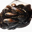 Net of mussels — Stock Photo
