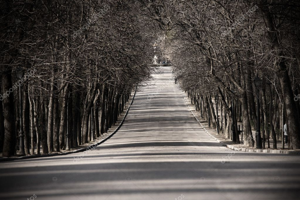 A black and white picture of a mysterious alley in Retiro Park in Madrid, Spain  Stock Photo #5015258