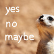 African suricate making decision — Stock Photo
