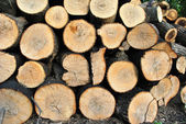 Fire wood — Stockfoto
