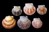 Arrangement of Sea shells — Stock Photo