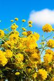 Yellow flowers — Stok fotoğraf