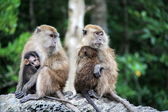 Monkey family — Stock Photo