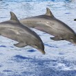 Dolphins — Stock Photo #4122004