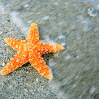 图库照片: Starfish on sandy tropical beach with wave motion
