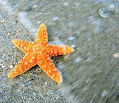 Starfish on sandy tropical beach with wave motion — Φωτογραφία Αρχείου
