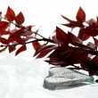 Heart shape ice and red leafs — Stock Photo
