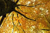 Herfst kleuren — Stockfoto