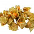 Many Cape Gooseberries (Physalis peruviana) – isolated — Stock Photo