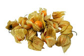 Many Cape Gooseberries (Physalis peruviana) – isolated — Stock Photo