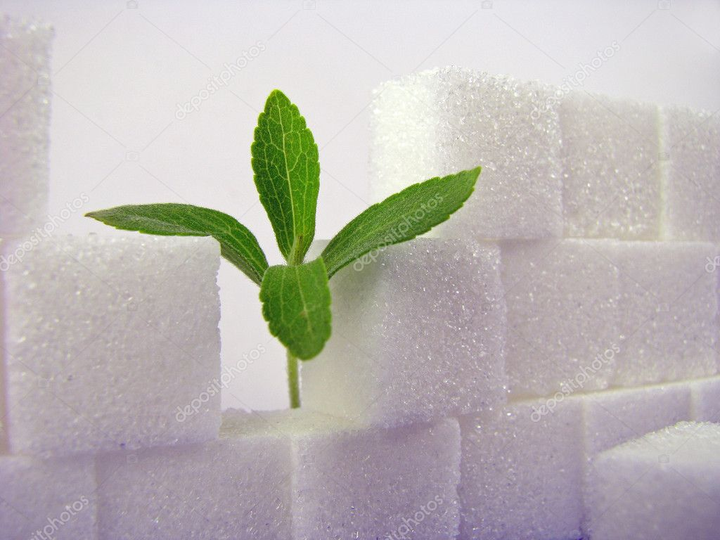Stevia and a broken lump sugar wall — Stock Photo #3968746