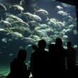 Aquarium — Stock Photo