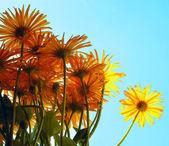 鲜花和天空 — 图库照片