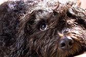 Wet dog — Stock Photo