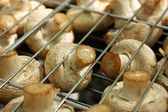 Mushrooms On The Grill — Stock Photo