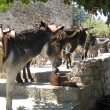 Donkeys On The Streets Of Lindos Rhodes — Stock Photo #4933366