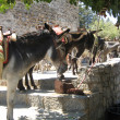 Stock Photo: Donkeys On The Streets Of Lindos Rhodes