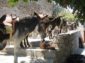 Donkeys On The Streets Of Lindos Rhodes — Stock Photo