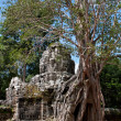 Royalty-Free Stock Photo: Tree On Angkor Ruins