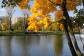 Yellow tree in a park — Foto Stock